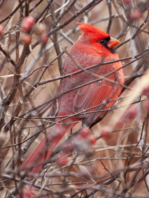 Hidden cardinal