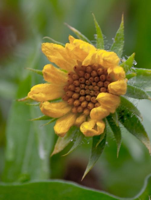 flower3_blog