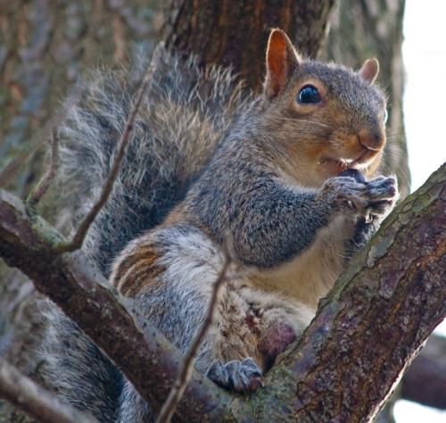 squirrel1_blog