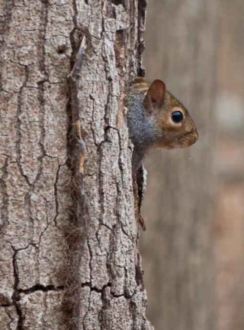squirrel4_blog