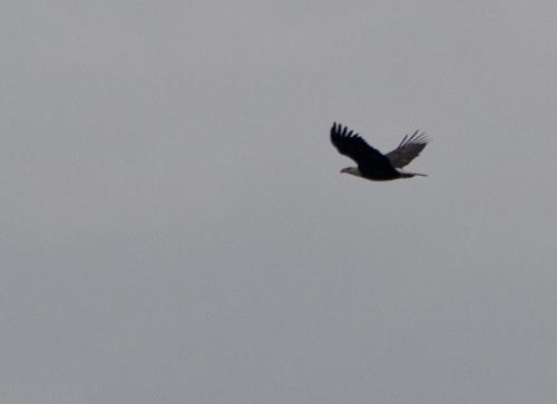 eagle2_blog