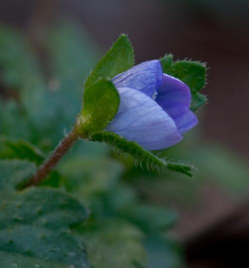 flowers2_blog