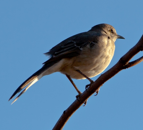 mockingbird_blog