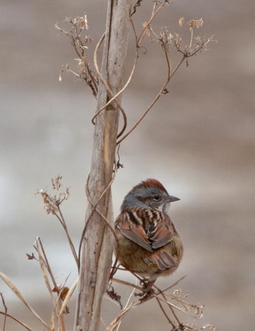 sparrow_blog