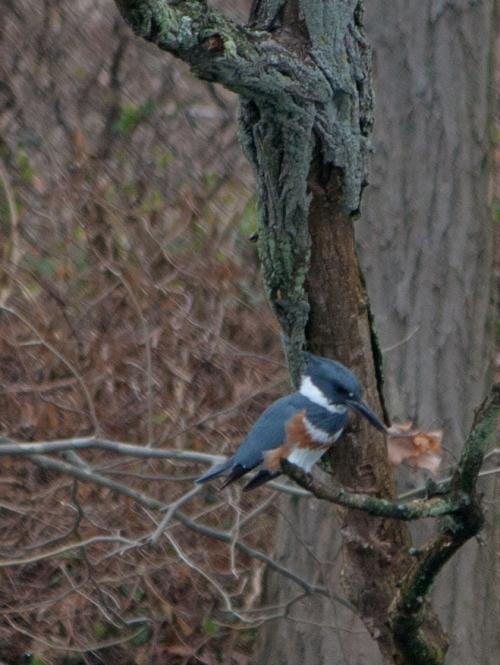 kingfisher_F3_blog