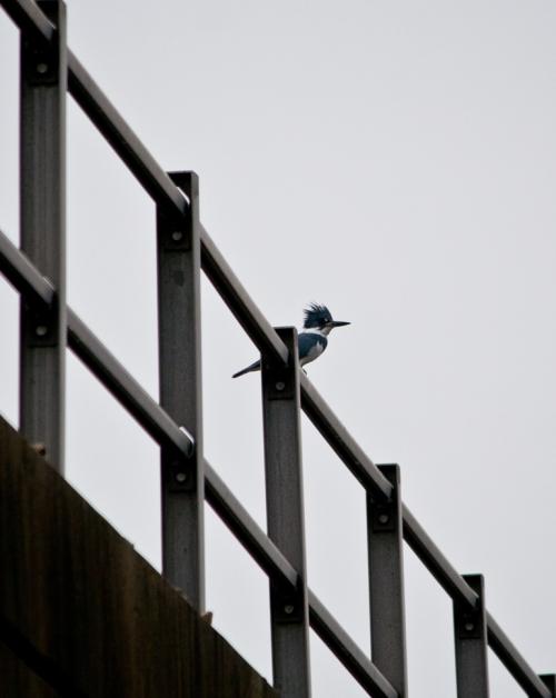 kingfisher_M1_blog