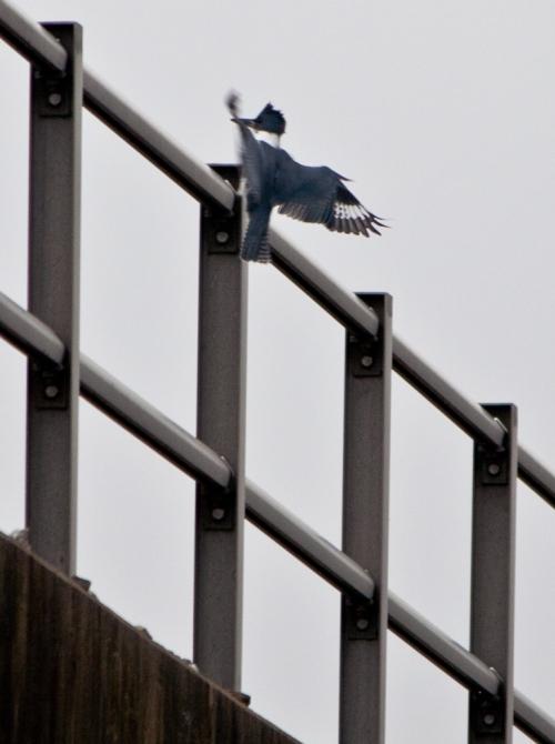 kingfisher_M5_blog