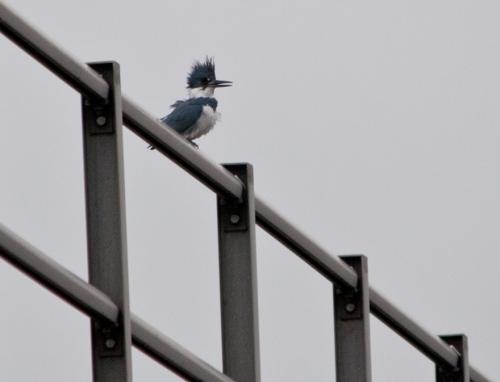 kingfisher_M6_blog
