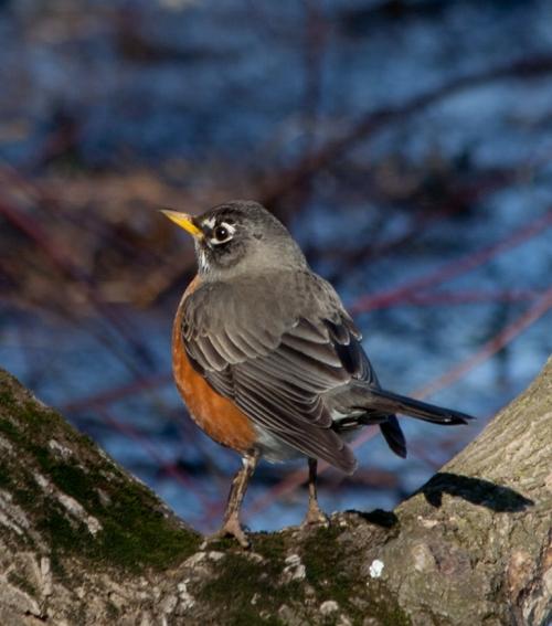 Robin2_blog