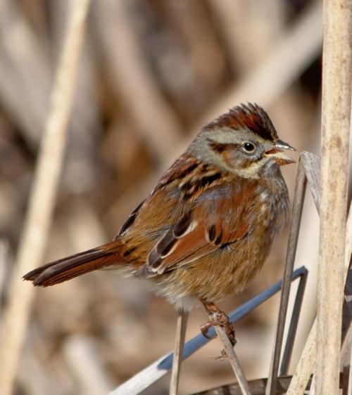 sparrow2_blog