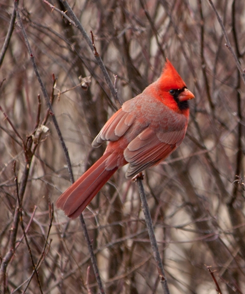 cardinal_blog
