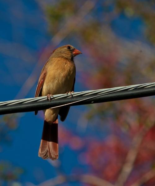 cardinal_wire_blog