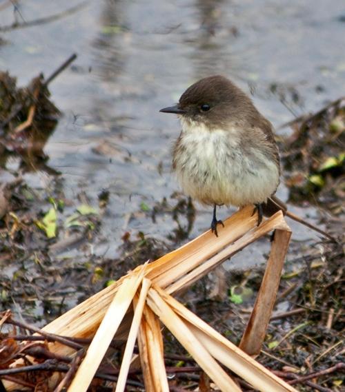 littlebird1_blog