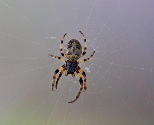spider1_blog