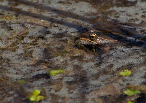 springfrog1_blog