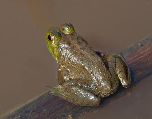 frog1_blog