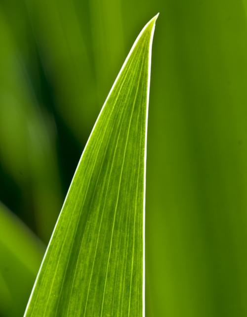 leaf2_blog
