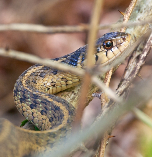 snake1_blog