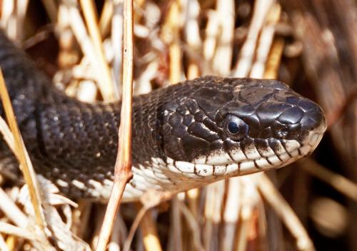 snake_blog