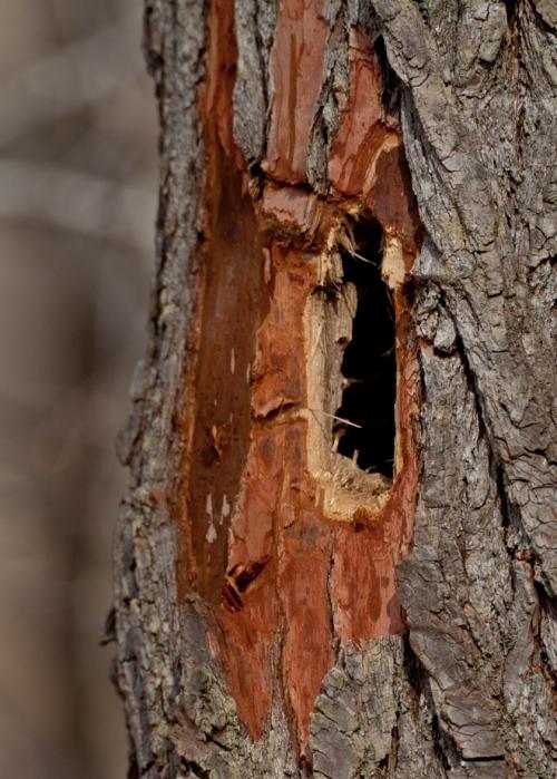 tree2_blog