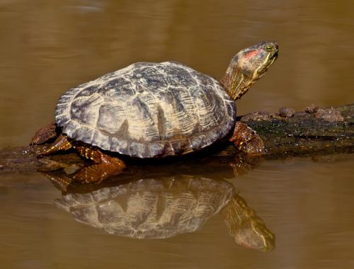 turtle1_blog