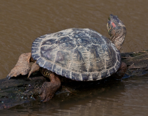 turtle2_blog