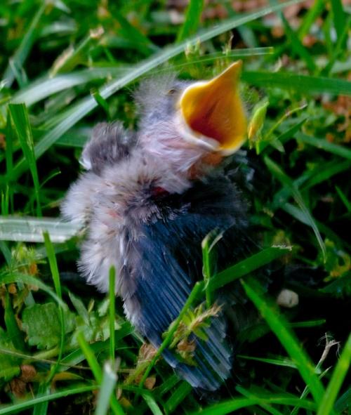 baby_bird1_blog