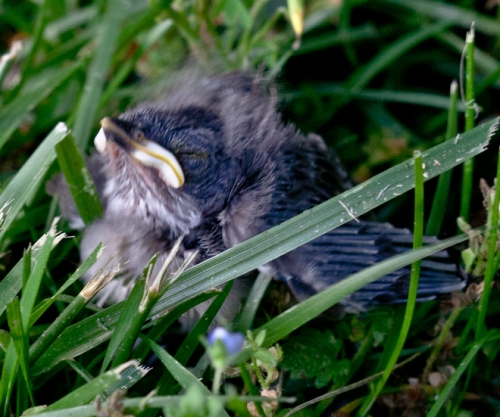 baby_bird3_blog
