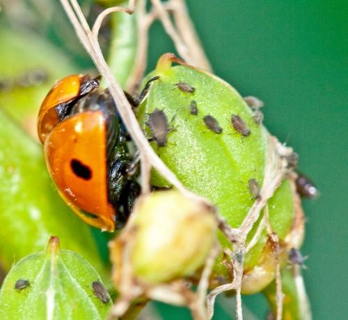 bugs_blog