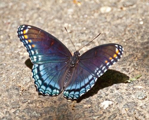 butterfly1_blog