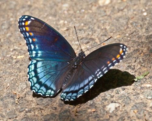 butterfly2_blog