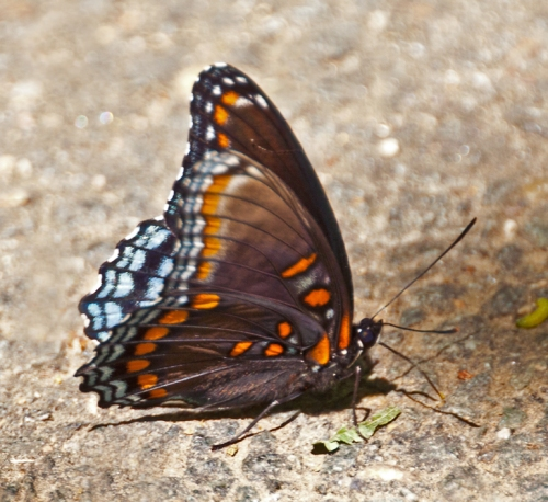 butterfly3_blog
