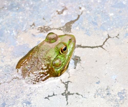 frog2_blog