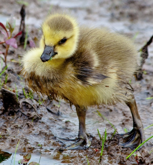 gosling_wet_blog