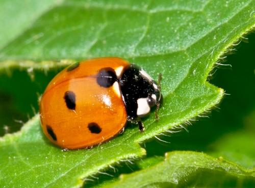 ladybug1_blog