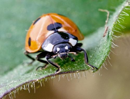 ladybug1a_blog