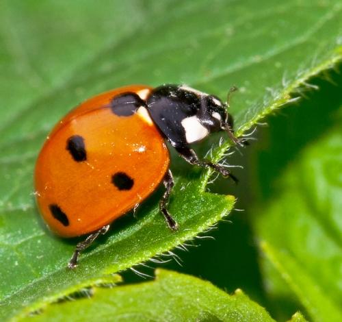 ladybug2_blog