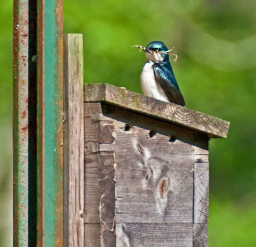 nesting2_blog