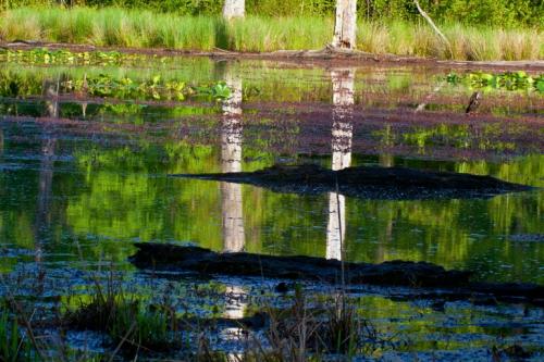 reflection1_blog
