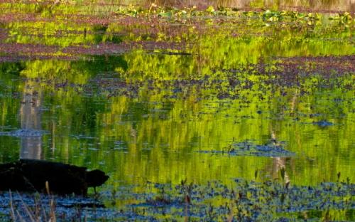 reflection2_blog