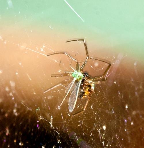 spider2_blog