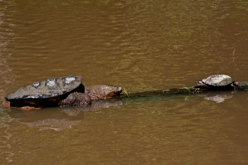 turtles_blog