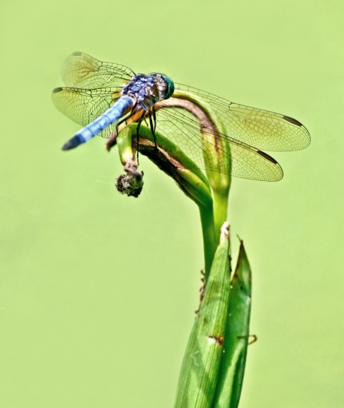 plant_dragonfly_edited-1_blog