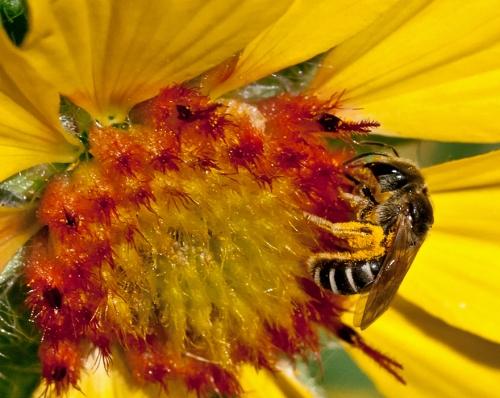 pollen_1a_blog