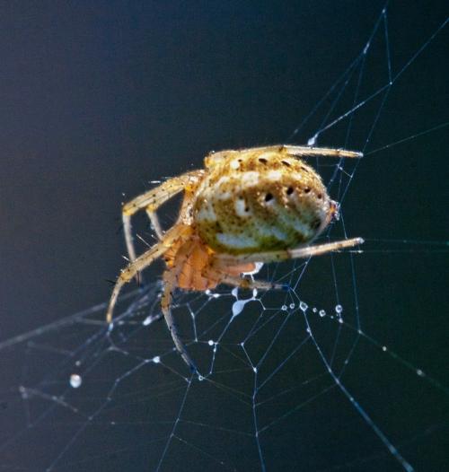spider_drops_blog