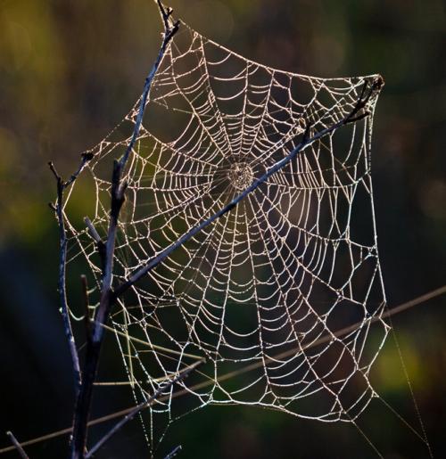 web4_blog