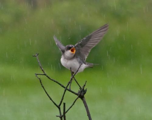 wetbird1_blog