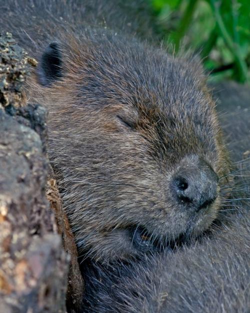 beaver5_blog