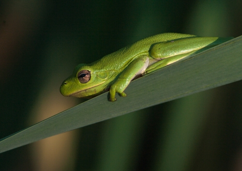 little_green_frog1_blog