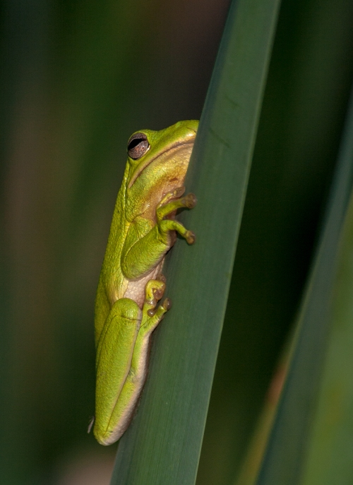 little_green_frog4_blog